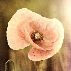 rose klaproos van Yvonne Blokland