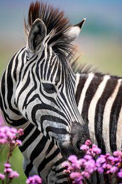 Jonge zebra met bloemen in kleur van De Afrika Specialist