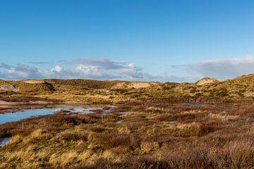 Dünenlandschaft in Bergen aan Zee, Nord-Holland, Niederlande, Europa von WorldWidePhotoWeb