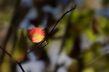 première feuille rouge d'automne dans la forêt sombre, fond de nature saisonnier avec espace de copi