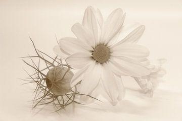 Chrysanthemen - Stillleben von Dagmar Marina