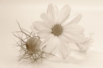 Chrysanthemen - Stillleben van Dagmar Marina