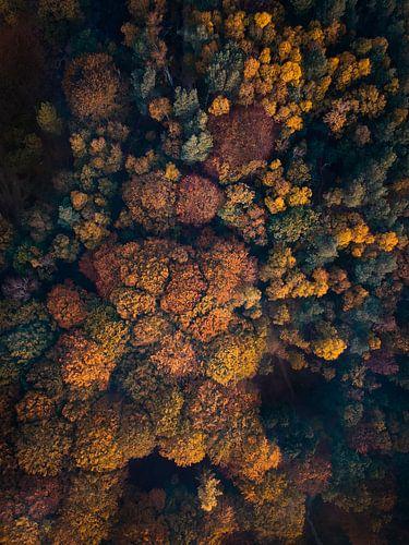 Herfst vanuit de lucht van