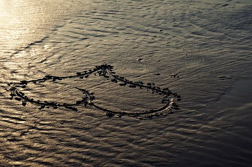 Love on the beach van