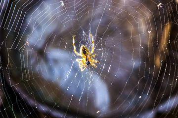 Die Spinne im Netz von Studio Kunsthart