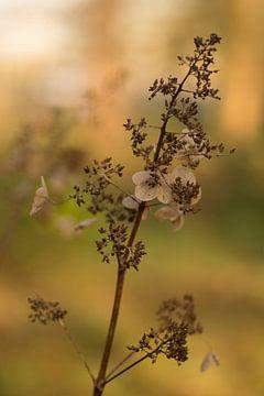 In Herbststimmung von Birgitte Bergman