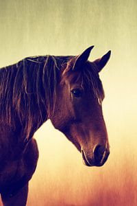 Westelijk paard in porträit