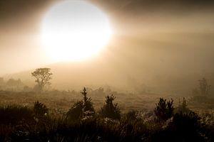 Zonsopgang in Sri Lanka: een mysterieus landschap tijdens een ochtendwandeling van