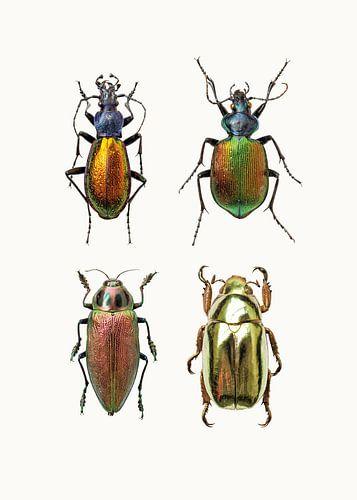 Rariteitenkabinet_Insecten_09 van