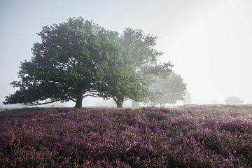 Bomen in de mist op de Strabrechtse Heide von Kristel van de Laar