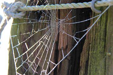 Spinnenweb met rijp von Ilona Bredewold