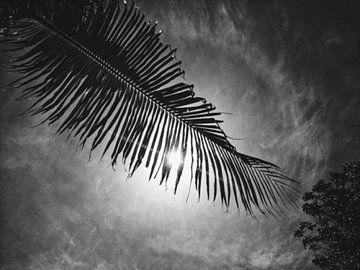 Palmboom blad van Fleur Kok