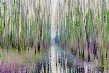 Schilderachtig bewogen bos van Connie Posthuma