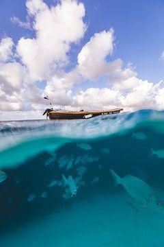 Klein Bonaire onderwater von Andy Troy