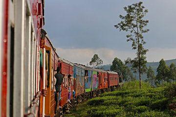 Treinrit door de theevelden van Sri Lanka van Antwan Janssen