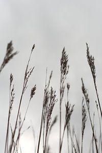 Als de wind opkomt van Alexandra Van den Bossche