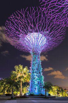 Supertrees, Gardens by the Bay, Singapore van Markus Lange