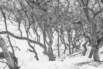 Kale bomen in de sneeuw van