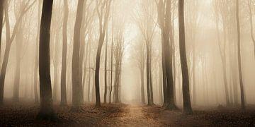 Chemin à travers une forêt brumeuse pendant un jour d'hiver brumeux