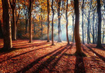 La lumière dans la forêt sur Quirien Marijs