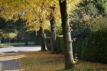 Mooie herfstkleuren en vallende bladeren van Tjamme Vis