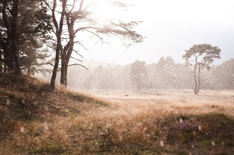 The beauty of rain van Judith Noorlandt