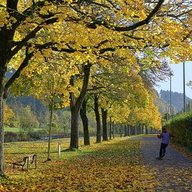 Gouden herfstochtend in Freiburg van Patrick Lohmüller