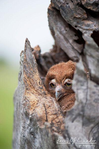 Owlie van Kevin Van Haesendonck