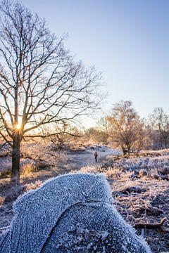 Bevroren ochtend wandeling van Ian Segers