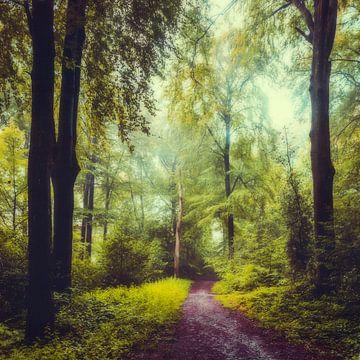Sommermorgen in Laubwald von Dirk Wüstenhagen