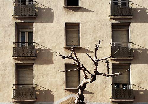 winter in Perpignan van
