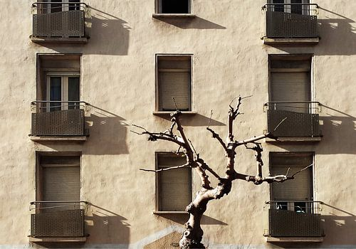 winter in Perpignan sur