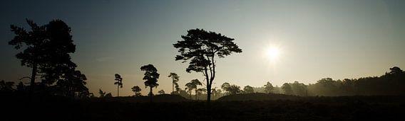 Momen silhouet bij zonsopkomst, Leuvenumse Bossen