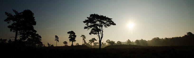 Momen silhouet bij zonsopkomst, Leuvenumse Bossen sur Maurice Verschuur