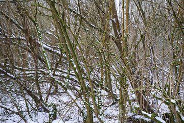 Bomen in winterlandschap in de sneeuw van Ingrid Van Maurik