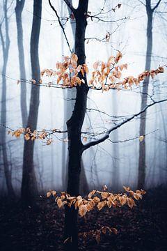 Mystischer Wald 017 van Oliver Henze