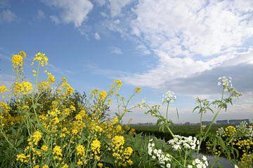 Herik und Pfeifenkraut im Frühjahr von A'da de Bruin