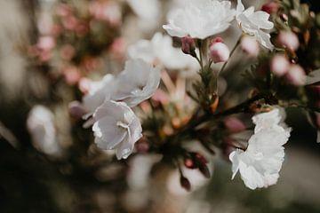 Bloemen met bokeh van Sanne van Pinxten