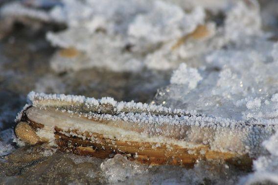 ijskristallen van zeewater door extreme vriestemperatuur