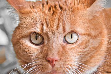 Verdwalen in katten ogen van J..M de Jong-Jansen