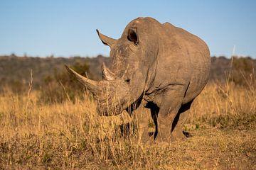 Neushoorn op de savanne van Peter Leenen