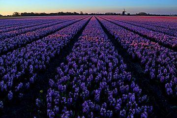 Deep purple van Peter Heins
