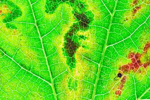 Herfstblad met nerven