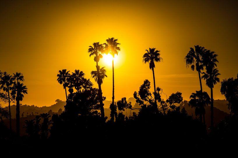 Beverly Hills Palmbomen von Michel van Rossum