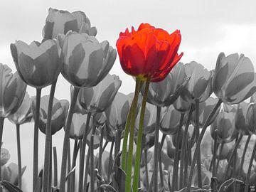 tulpen van Karin Keesmaat Kijk-Kunst