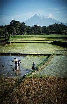 Arbeiter im Reisfeld Java von Karel Ham