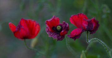 Rot und Violett von Peter Heins