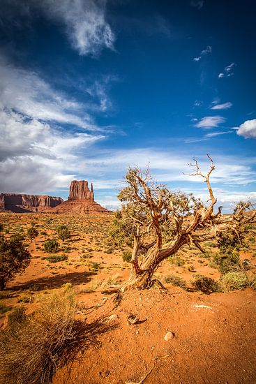 Sunny day @ Monument Valley