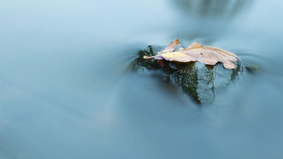 Herfstblad op steen in beek van Art Wittingen