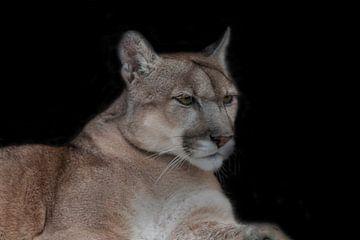 Puma, Lion de montagne sur Gert Hilbink